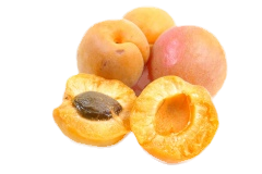 Apricot is safe to feed to African grey parrots when the pit is removed