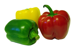 Bell peppers are safe food for African grey parrots