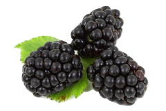 Blackberries are safe food for African grey parrots