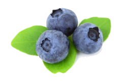 Blueberries are a safe food for African grey parrots