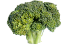 Broccoli is a good food for African grey parrots