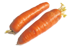 Raw as well as cooked carrots are safe to feed to your parrot