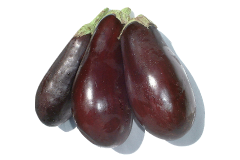 The cooked flesh of the eggplant can be fed to a grey parrot but not the stems or leaves.
