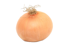 Onion is toxic for your parrot, whether it is raw, cooked or dried