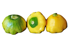 Pattypan squash is a safe food for your parrot pet to eat