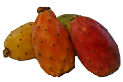Prickly pear may be fed safely to your African grey parrot