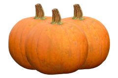 Pumpkin is a safe food for your African grey parrot