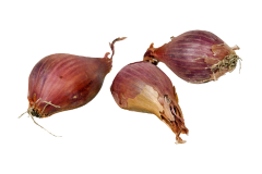 Shallots contain the same toxic compounds as onions and should not be fed to parrots.