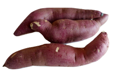 Sweet potato can safely be fed to a parrot in either raw or cooked form