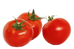Although the tomato fruit is safe for feeding to parrots in very limited quantity, the leaves and stems of the tomato plant are poisonous and should be avoided.